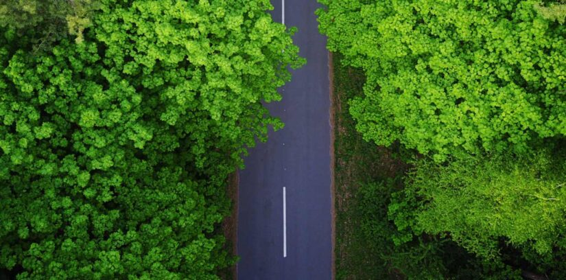 Road through the forest, aerial view